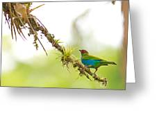 Bay-headed Tanager Greeting Card