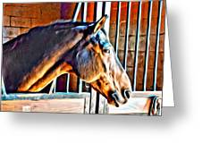 Bay In Stall Greeting Card
