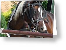 Bay Pinto Amish Buggy Horse Greeting Card