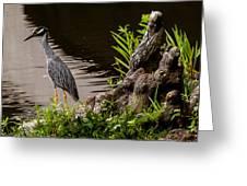 Bayou Bird Greeting Card