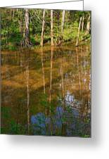 Bayou Reflections Greeting Card