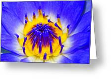 Blue Brilliance Number Two Greeting Card
