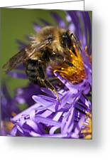 Be My Bee... Greeting Card