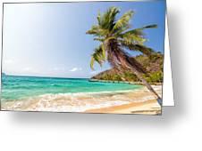 Beach And Palm Tree Greeting Card