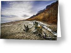 Beach At Scarborough Bluffs Greeting Card by Elena Elisseeva