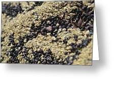 Beach Barnacles Greeting Card