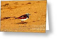Beach Bird 1 Greeting Card