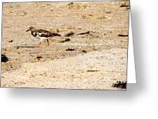 Beach Bird 2 Greeting Card