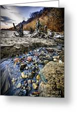 Beach Brook At Scarborough Bluffs Greeting Card by Elena Elisseeva