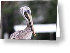 Beach Bum - Pelican Greeting Card