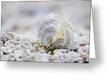Beach Clam Greeting Card