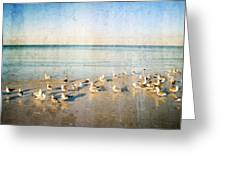Beach Combers - Seagull Art By Sharon Cummings Greeting Card