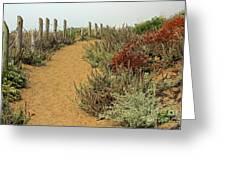Beach Dune  Greeting Card