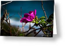 Beach Flower Greeting Card