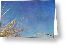 Beach Grass In The Wind Greeting Card