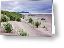 Beach Grass Greeting Card by Robert Bales