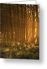 Beach Light Through The Trees Greeting Card