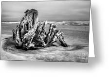 Beach Monster 2 - Outer Banks Bw Greeting Card