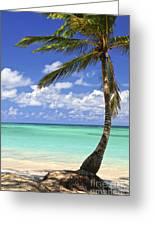 Beach Of A Tropical Island Greeting Card