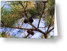 Beach Pine Greeting Card