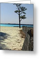 Beach Pine Greeting Card
