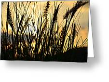 Beach Rise Greeting Card by Laura Fasulo