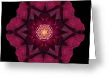 Beach Rose I Flower Mandala Greeting Card by David J Bookbinder