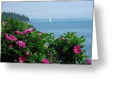 Beach Roses Greeting Card