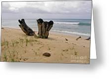 Beach Scenery Greeting Card