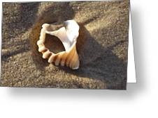 Beach Shell Greeting Card by David Yack