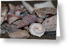 Beach Shells 3 Greeting Card