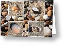 Beach Shells And Rocks Collage Greeting Card