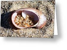 Beach Treasure Greeting Card by Carol Groenen