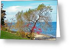 Beach Tree Greeting Card