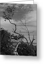 beach tree BW Greeting Card