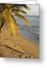 Beach Under Golden Palm Greeting Card
