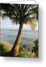 Beach Under The Palm 3 Greeting Card