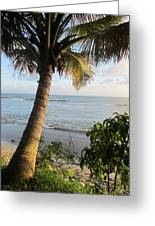 Beach Under The Palm 4 Greeting Card