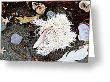 Beach Wares - Shells - Feather Greeting Card