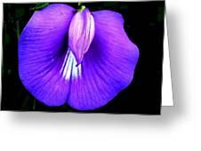 Beach Wildflower  Greeting Card