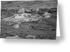 Beach With Ice Formations Greeting Card