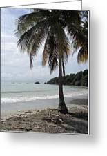 Beach With Palm Tree Greeting Card