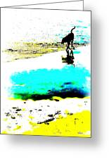 Beachcomber Greeting Card by Brian D Meredith