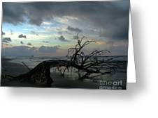 Beached Tree Greeting Card