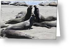 Beachmasters - Elephant Seals Greeting Card
