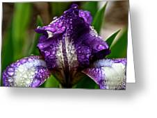 Beaded Iris Greeting Card