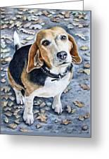 Beagle In Autumn Greeting Card