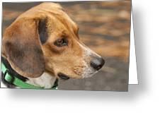 Beagle Loyalty Greeting Card