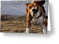 Beagle Shake Greeting Card