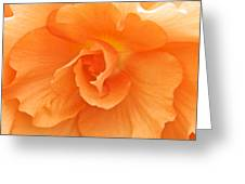 Begonia Beauty Greeting Card